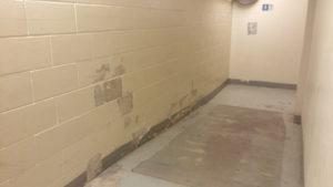 20160429_Fern basement